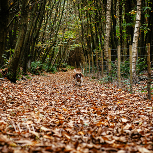 The Woodland Wife 10 signs of Autumn - Autumn Leaves