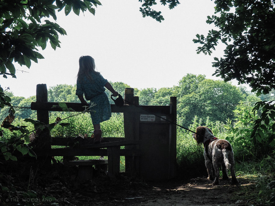The Woodland Wife - Woodland Walks and Adventures