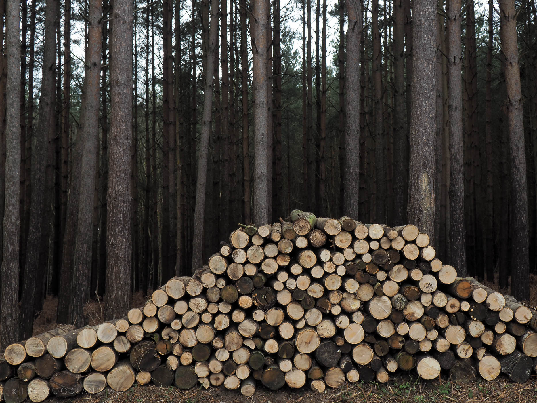 The Woodland Wife - The Wood Pile Wall