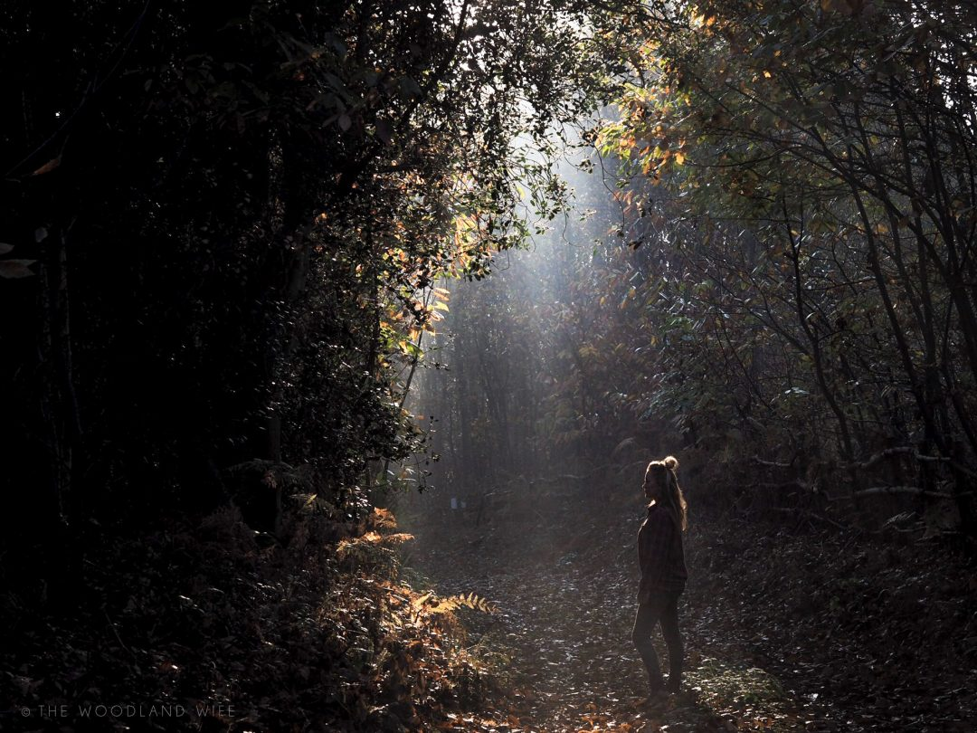The Woodland Wife - Autumn Solitude - A Season of inspiration