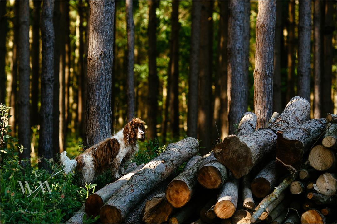 woodland_wife_dog_2