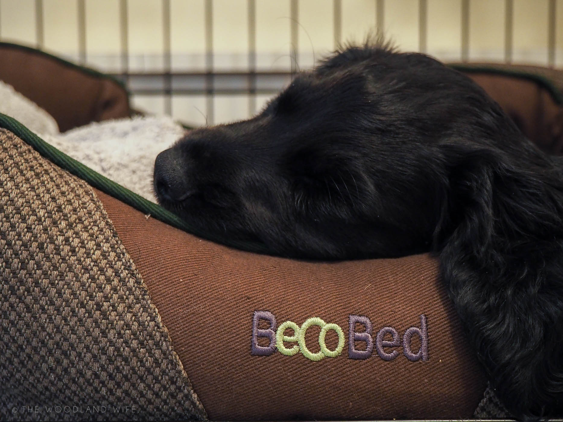 The Woodland Wife - Beco Pets - Beco Bed, Donut Bed, Eco Dog Bed