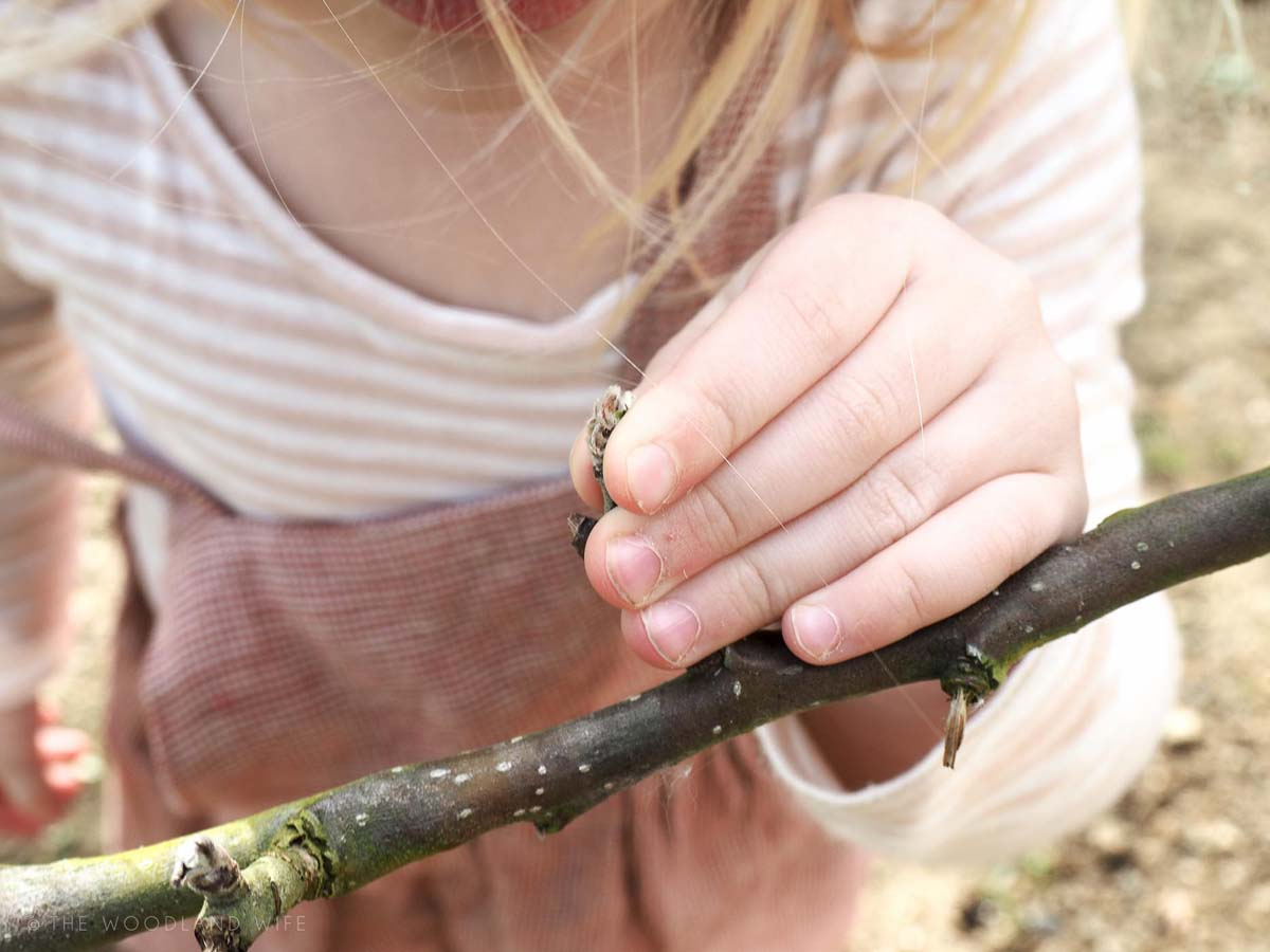 The Woodland Wife - Learning from my mistakes & Listening to Maternal Instincts